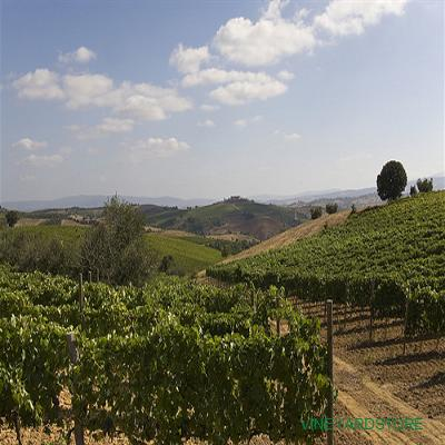 tl_files/catalogo/impianti/vineyard_hill.jpg